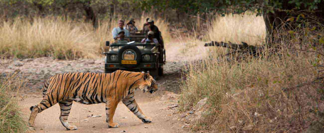 Wildlife Tour with Khajuraho